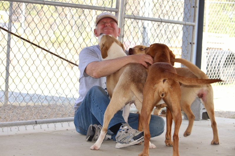 advocacy no-kill community photo of volunteer with dogs at rescue